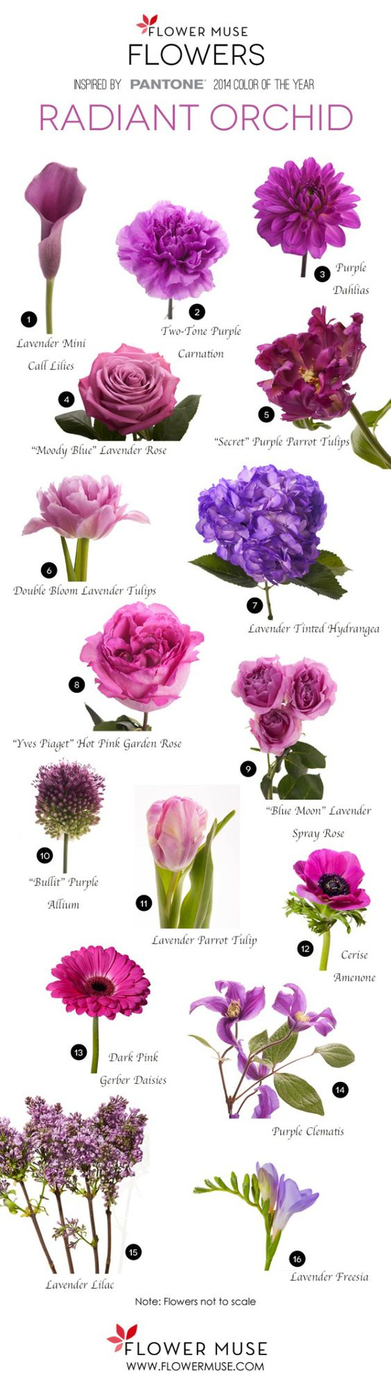 Flower names by Color Flower, Names and Pink