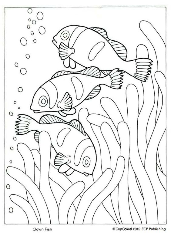 clowns animal coloring pages and coloring on pinterest