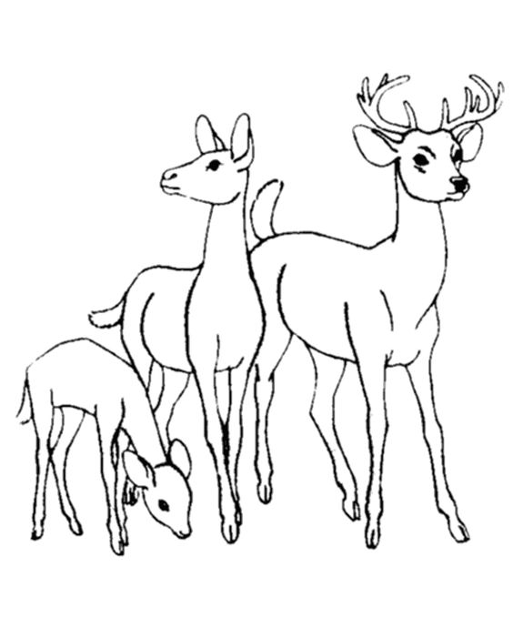 deer deer family and coloring pages on pinterest