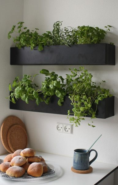An easy DIY project to grow herbs right in your kitchen on wall plater boxes.: