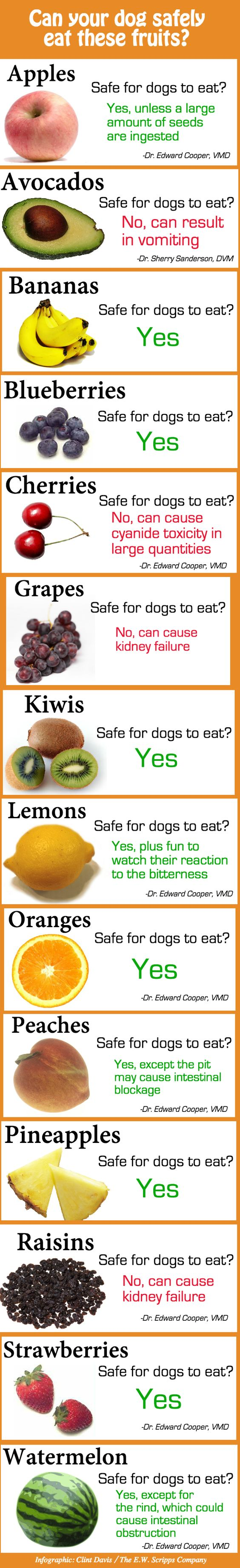 All The Fruits Safe To Share With Your Dog, In One Chart