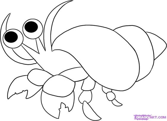 hermit crabs crabs and coloring pages for kids on pinterest