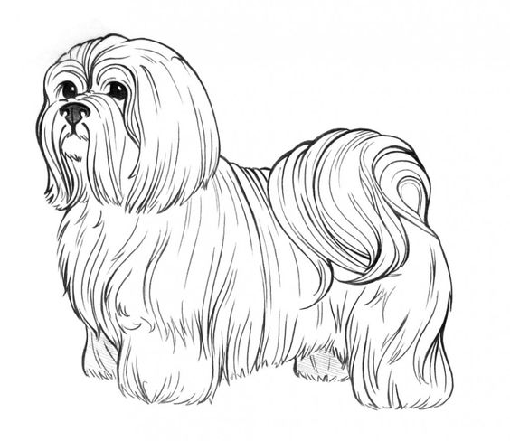 dog breeds coloring pages and coloring on pinterest