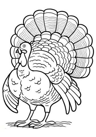 turkey coloring pages coloring pages and best turkey on pinterest