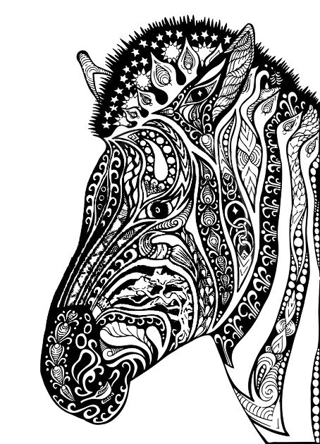 zebras adult coloring pages and coloring on pinterest
