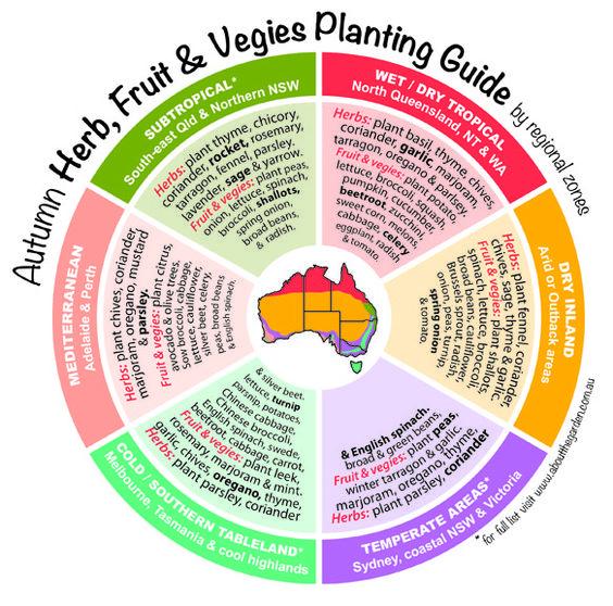 Autumn Herb, Fruit & Vegies Planting Guide by regional
