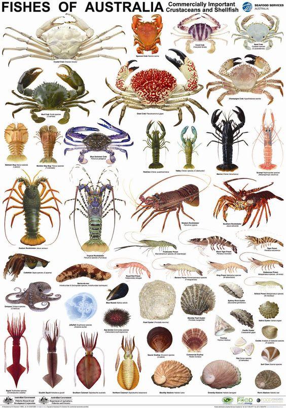 PosterCrustaceanSpecies.jpg 1,134×1,620 pixels FYI