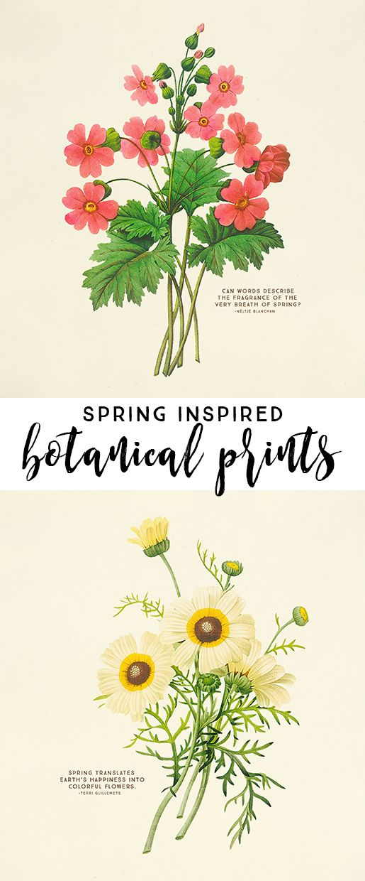 Spring Inspired Vintage Botanical Prints via Live Laugh Rowe - Who doesn't love free printable wall art too? These prints would make a great addition to your spring decor by placing them on a table or hanging them on your wall.