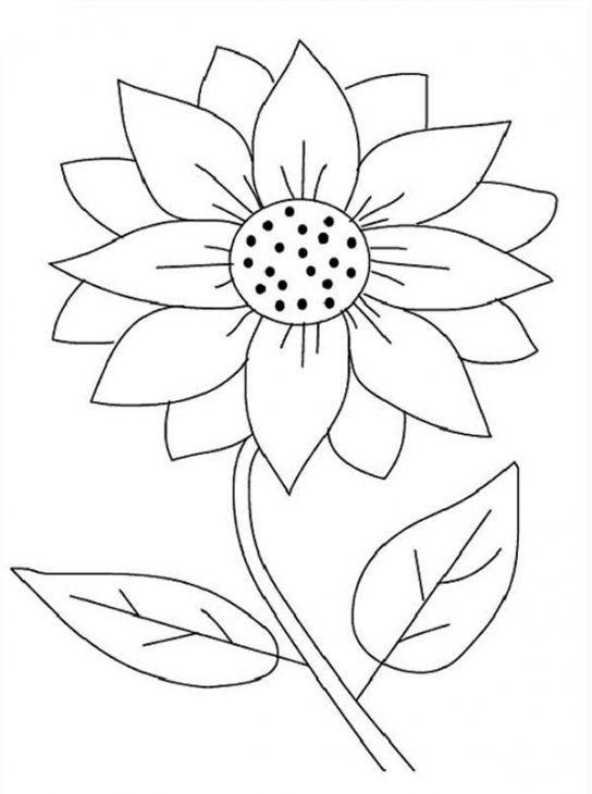 coloring pages sunflowers and coloring on pinterest