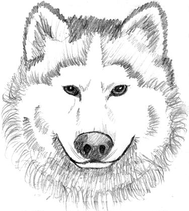 coloring pages coloring and baby wolves on pinterest