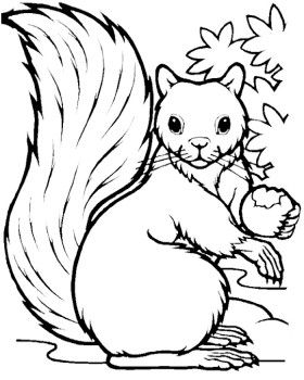 squirrel cute squirrel and coloring pages on pinterest