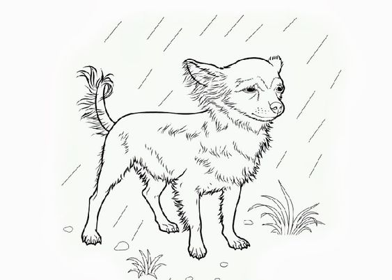 chihuahuas beverly hills and coloring pages on pinterest
