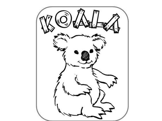 koala bears koalas and bears on pinterest