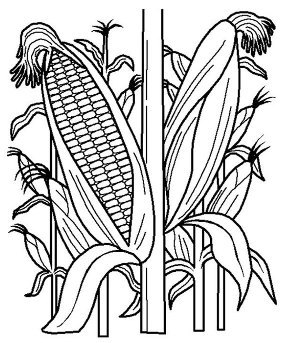 fruits and vegetables cornstalk in the corn field coloring page
