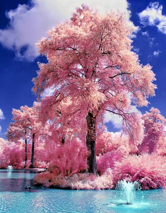 Japanese Water Gardens............gorgeous!!!!!!!!!!!!!: