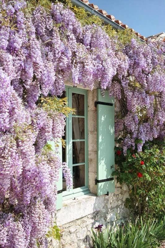 Wisteria, Window shutters and Country on Pinterest