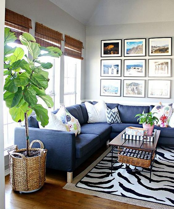 Fiddle Leaf Fig is well suited for growing indoors because it does not become excessively large and at the same time remain noticeable. Fiddle leaf fig care and growing is simple if you fulfill a few basic requirements.: