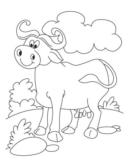 coloring pages buffalo and coloring pages for kids on pinterest