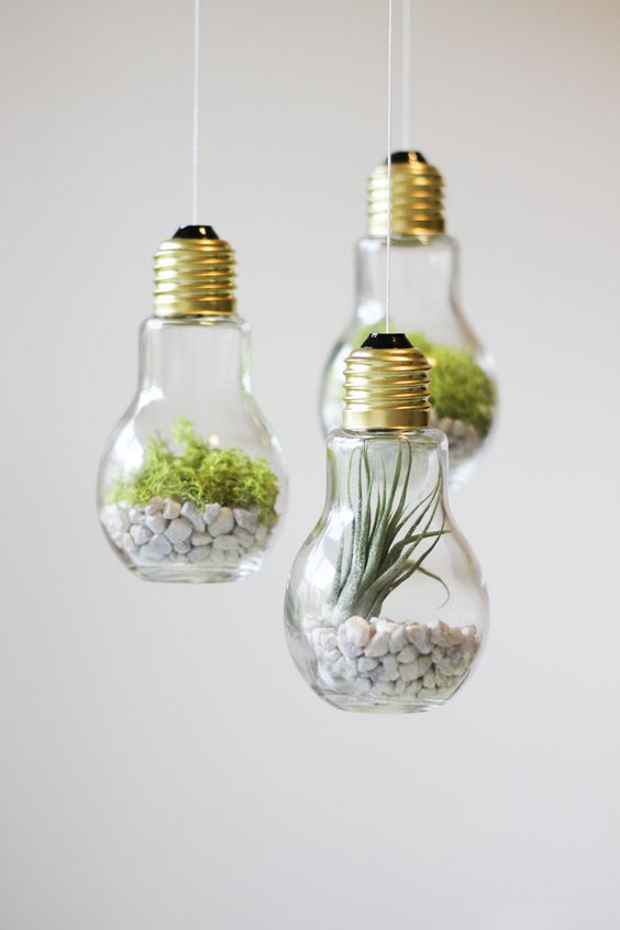 DIY Lightbulb Terrariums:
