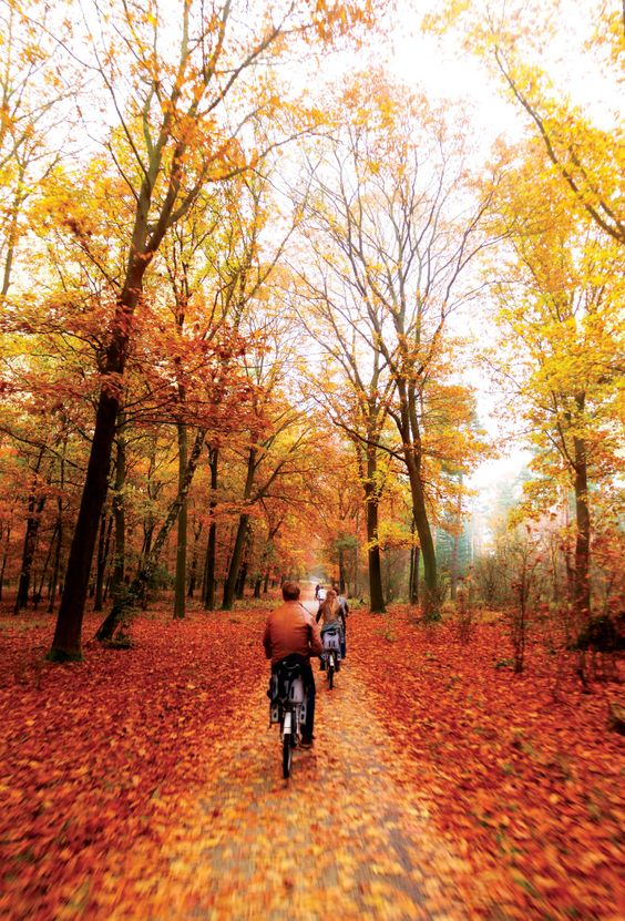 Get the most out of Fall-Walk, Run or Bike on one of Kansas City's beautiful trails.: