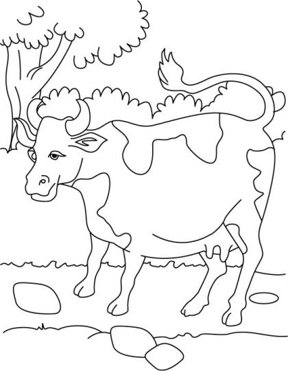 coloring pages cow and coloring pages for kids on pinterest
