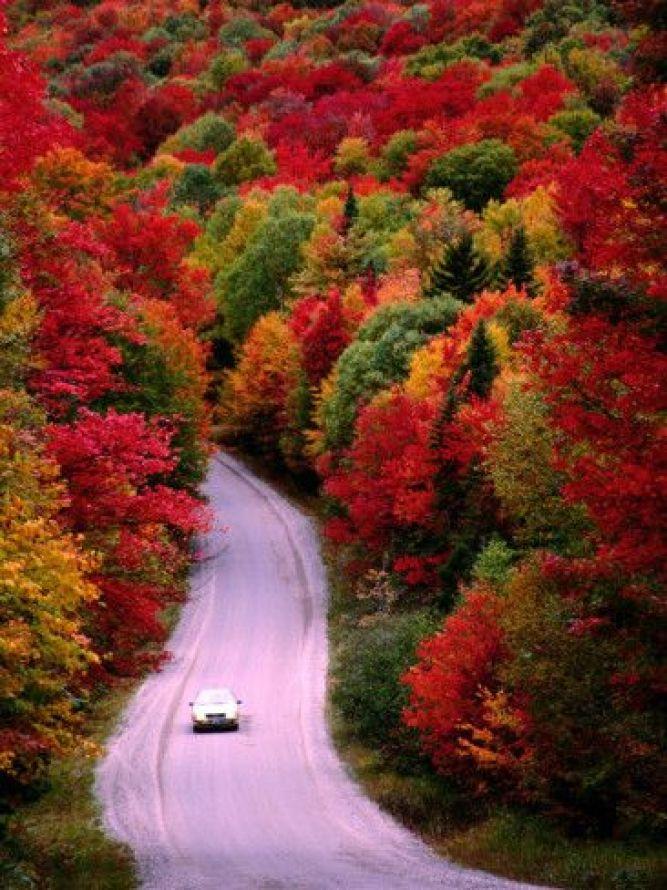 Fall colors: