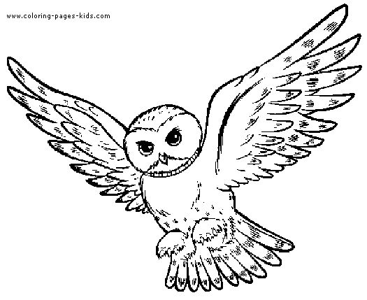 owl owl coloring pages and animal coloring pages on pinterest