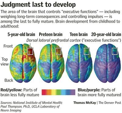 Executive Function controlled by Pre-frontal cortex