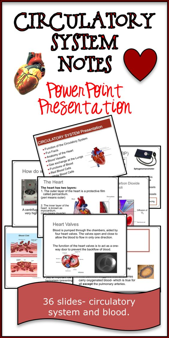 Circulatory System Notes In love, Power point