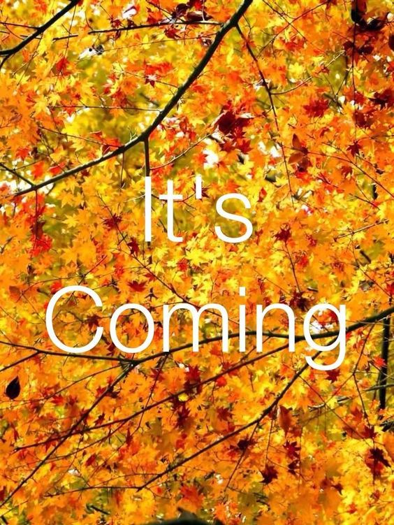 Fall, its coming quotes quote autumn fall hello fall fall