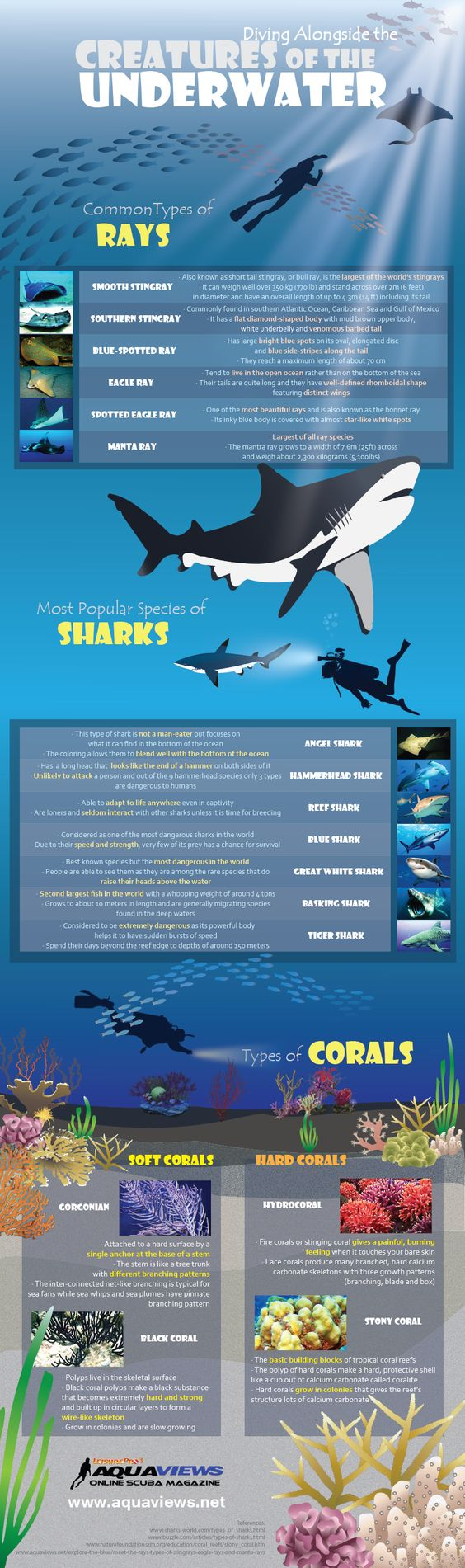 Creatures of the Underwater infographic