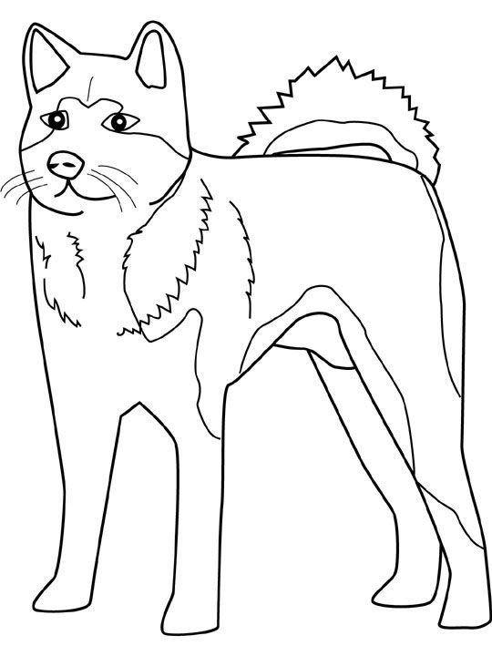 coloring sheets husky and coloring on pinterest