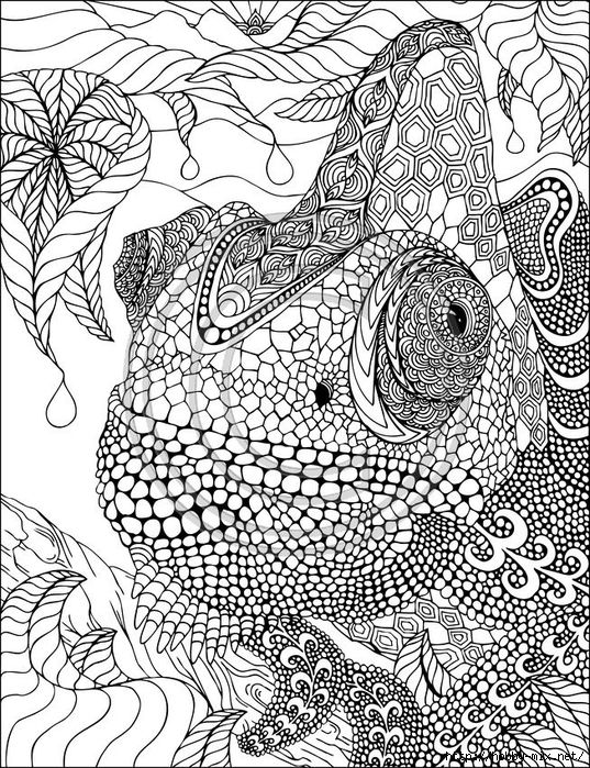 zentangle adult coloring pages and adult coloring on pinterest
