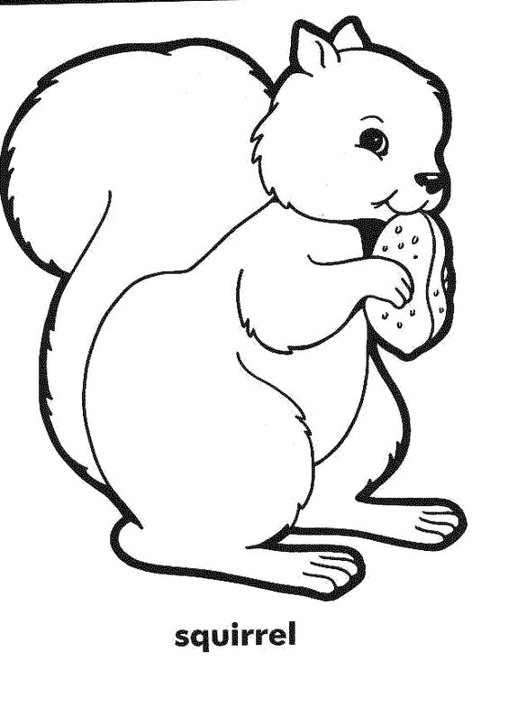 squirrel coloring pages and coloring on pinterest
