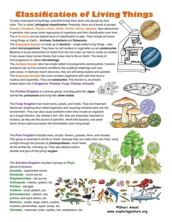 Classification of Living Things. Find this on