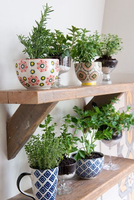 Use cocktail glasses and mugs for a stylish way to grow your herbs! #HomeGoodsHappy: