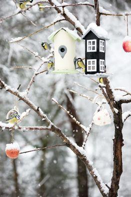 birdsfeed winter
