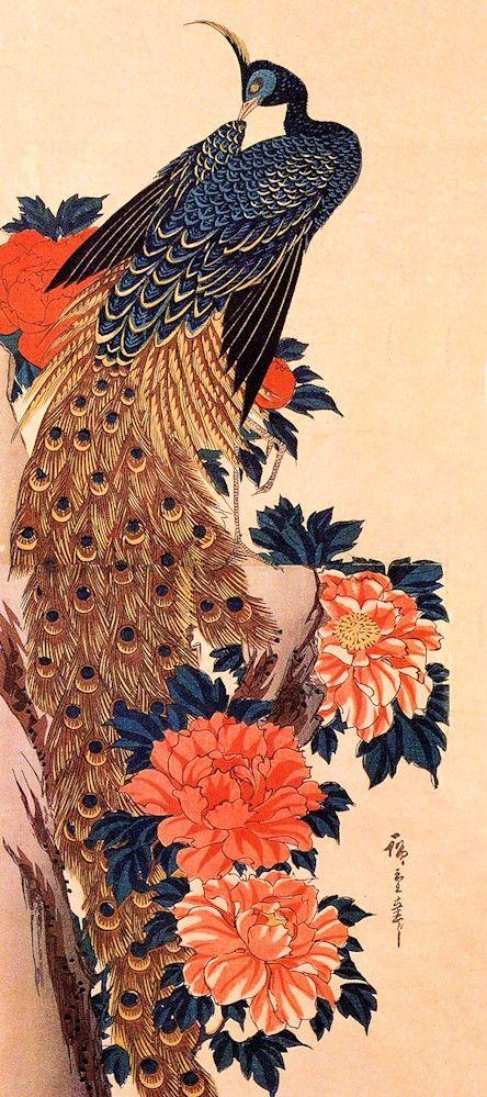 Peacocks, Peonies and Refrigerator on Pinterest