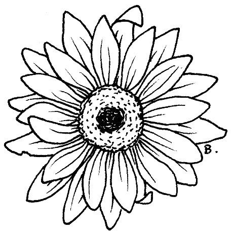 gerbera sunflowers and daisy flowers on pinterest