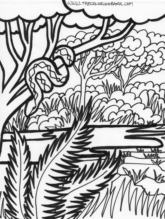 coloring pages jungles and coloring sheets on pinterest