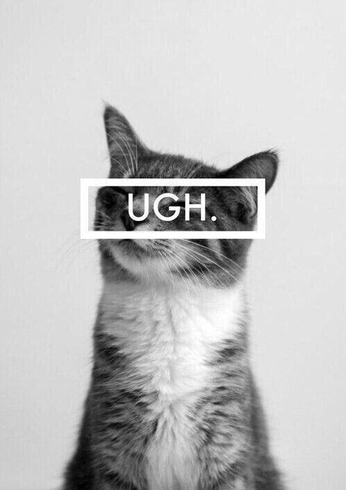 ugh. cat