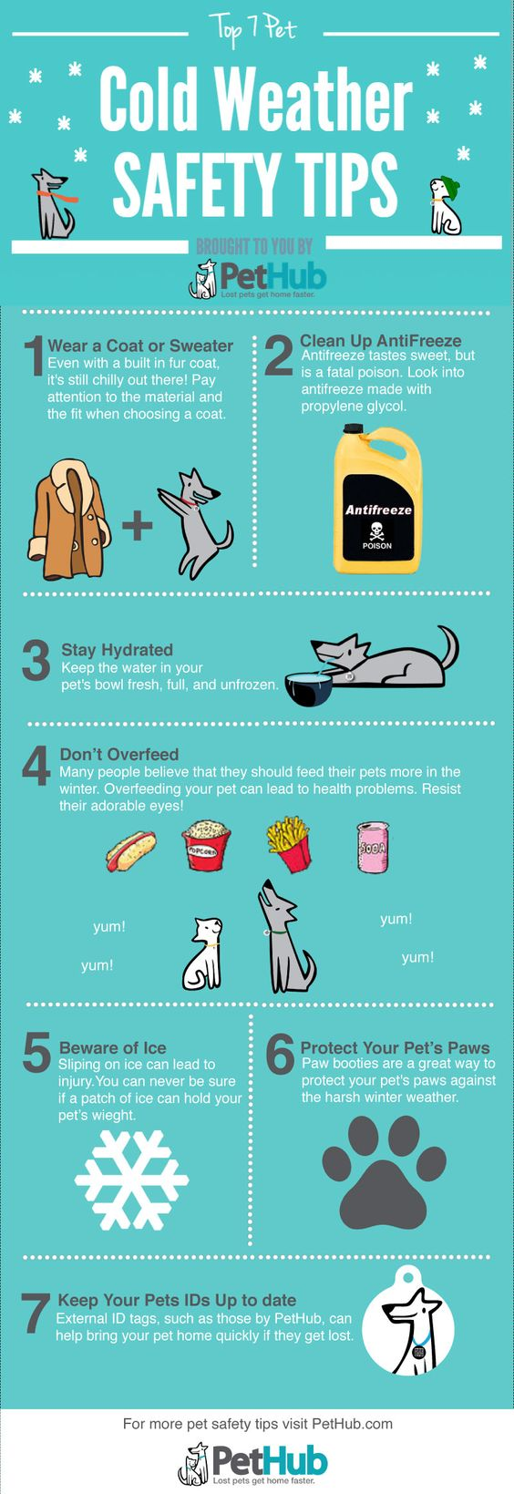 Cold Weather Safety! Cool Infographics by PetHub