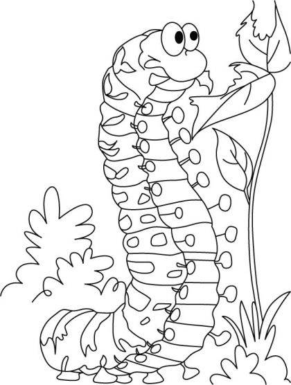 caterpillar coloring pages and coloring on pinterest