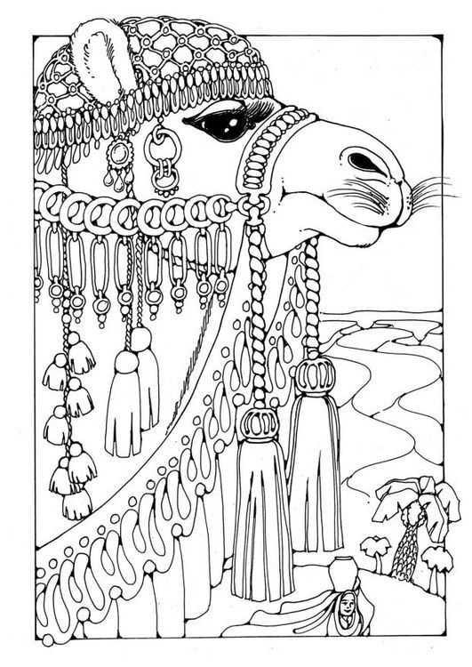 camel coloring and coloring pages on pinterest