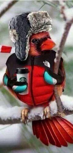 Cardinal Bird Wearing A Parka Amp Hat Holding A Starbucks