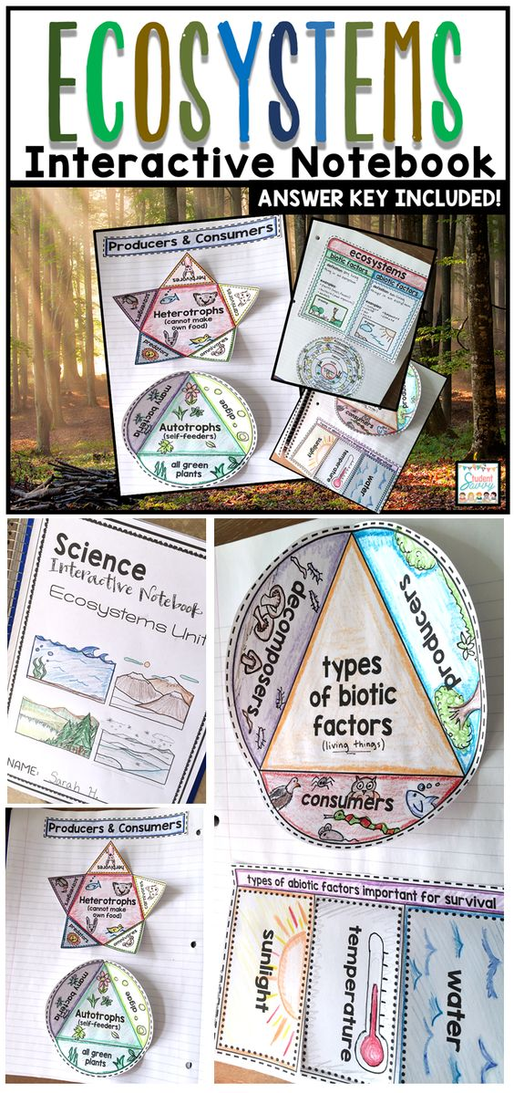 Ecosystems Interactive Notebook Earth Science Notebooks