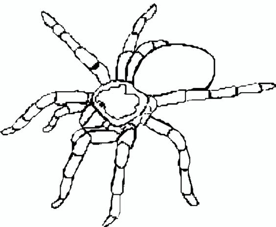 coloring pages coloring and spider on pinterest