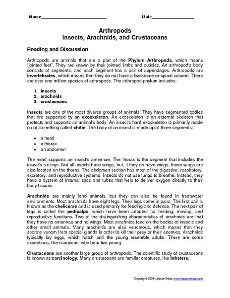 Arthropods Insects Arachnids And Crustaceans Worksheet