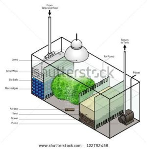 A refugium filter setup for an aquarium  stock vector | Устройство аквариума | Pinterest | All