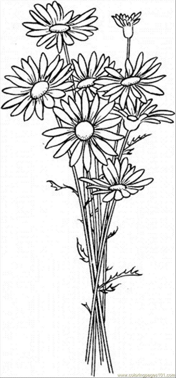 Coloring Daisies And Daisy Flowers On Pinterest